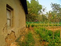 mud house (faruqlib) Tags: omar18 tree garden bangladesh