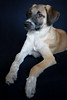 Socks was available for adoption (D_Snapper) Tags: adoptdontshop adoption shelter uaq ummalquwain socks sox dog puppy boy 11weeks animal portrait vignetting uae unitedarabemirates male sire mixedbreed mix straydogscenteruaq stray rescue