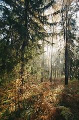 000116400020 (MatveyKarmakov) Tags: nikon nikonf3 kodak 35mmfilm morning film analog filmisnotdead filmphotography filmphoto filmcamera filmlandscape filmcommunity onfilm ishootfilm wood forest folk livefolk