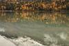 171008_123320_CB_5780 (aud.watson) Tags: alaska chugachnationalforest sewardhwy traillake traillakes trailcreek trailriver moosepass taigabiome borealforest subarticclimate glacialsilt glacialsediment glacialrocks braidedriver mountain mountains river rivers moraine forest autumnleaves autumncolours lake wetlands swamp bird reflection reflections water snow ice cloud clouds