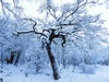 Branching (stckrboy) Tags: pen winter nature olympuspen outdoor epl7 trees frozen cold scotland tree snowdays forest airdrie penepl7 olympus park lanarkshire branches snow white