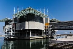 Lisbon Oceanarium [explored] (Strocchi) Tags: lisbonoceanarium portogallo portugal peterchermayeff lisbon lisboa lisbona canon eos6d 24105mm