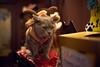 Grumpy santa helper (KaeriRin) Tags: cat catcafe akihabara tokyo japan japanese japanesecat christmas sleeping sony 7m2 sony7m2 7mii voigtlander 40mm 14 mc 40mm14mc adapted lens mmount