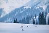 Winter Adventure in Gulmarg (pallab seth) Tags: winter landscape skiing kashmir snowboarding gulmarg adventuresports travel india nature