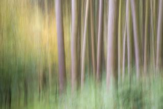 Lockerbrook forest
