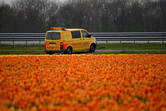 a Perfect Match (Johan Moerbeek) Tags: tulips tulpen volkswagen transporter anwb roadsecurity heiloo wegenwacht roadassist