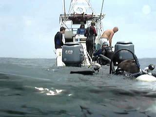USS Oriskany Dive, July 2008 (8)