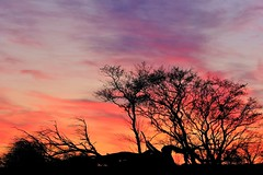 Sky on fire (peeteninge) Tags: sky tree colors colouredsky sunset nature natuur bomen lucht fujifilmxt2 fujifilm