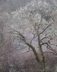 Dust (jellyfire) Tags: distagont3518 frost landscape landscapephotography lilac sonnartfe55mmf18za sony sonya7r sonyfe70200mmf40goss winter ze zeissdistagont18mmf35ze leeacaster pink snowdonia trees wales wood wwwleeacastercom zeiss