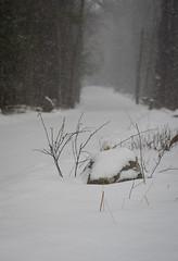 Snowstorm, Montague, MA (koperajoe) Tags: storm winter road snowflakes westernmassachusetts newengland snow