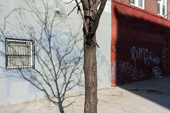 Tree by scottbrennan6 - Brooklyn, New York