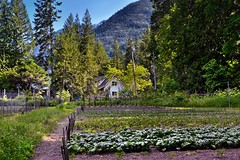 A Small Farm Nestled in the Mountains of Stehekin and the Lake Chelan National Recreation Area (thor_mark ) Tags: azimuth179 blueskies bonanzamassif capturenx2edited cascaderange castlerock centralnorthcascades colorefexpro crops day4 electricpole evergreentrees evergreens fence fenceline hillsideoftrees homesindistance lakechelannationalrecreationarea landscape lookingsouth mountains mountainsindistance mountainsoffindistance nature nikond800e northcascades northcascadesnationalparkservicecomplex outside pacificranges pole portfolio project365 rollinghillsides smallfarm sunny thegarden trees triptonorthcascadesandwashington utilitypole woodenfence lakechelannationalrecreation washington unitedstates