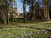 Snowdrops & Aconites at Audley End House Saffron Walden Essex (Simon Ross Photos) Tags: snowdrops aconite audleyendhouse saffronwalden essex englishheritage landscape olympus penf 2018