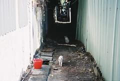 「你抱著小貓咪,藍眼睛不再憂鬱」 (YL.H) Tags: agfa film canon 500n taiwan taipei 底片 台北 cat 貓 analog