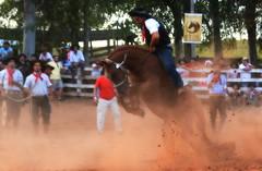 Carballo e Azambuja da Marca e Tradição (Eduardo Amorim) Tags: gaúcho gaúchos gaucho gauchos cavalos caballos horses chevaux cavalli pferde caballo horse cheval cavallo pferd pampa campanha fronteira quaraí riograndedosul brésil brasil sudamérica südamerika suramérica américadosul southamerica amériquedusud americameridionale américadelsur americadelsud cavalo 馬 حصان 马 лошадь ঘোড়া 말 סוס ม้า häst hest hevonen άλογο brazil eduardoamorim gineteada jineteada