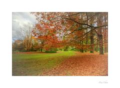 Autumn's Reprise (Meu :-)) Tags: autumn colours