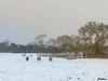 Burntwoocd, England (cattan2011) Tags: farms snow 英国 england burntwood traveltuesday travelphotography travelbloggers travel naturelovers natureperfection naturephotography nature landscapephotography landscape