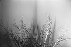 (barbieri simone) Tags: simonebarbieri film 35mm 2009 archive analog olympustrip35 filmisnotdead filmphotography istillshootfilm ishootfilm home