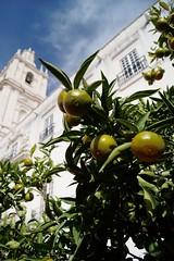 St.Citron (Insher) Tags: portugal lemon tree citron lisbon lisboa
