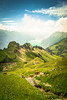 Above the lake (Toukensmash) Tags: green grass grassland mountain mountains mountainscape ladnscape swiss switzerland journey cows lake wide angle sony alpha58 scenery mist fog brienz brienzer rothorn colourful summer shining sun sunny hdr meadow daylight bright