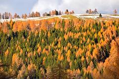 Colori autunnali dell'Alto adige (lucamarasca1) Tags: mountains background trees colorful colors 18200mm nikon nikkor italianlandscape italy italia colorsofnature landscape bosco wood montagna mountain nature