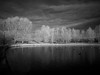 trees on the island (Johnson Cameraface) Tags: 2017 december autumn olympus omde1 em1 micro43 mzuiko 1240mm f28 johnsoncameraface doncaster southyorkshire infrared filter ir monochrome blackandwhite trees doncasterlakeside lake