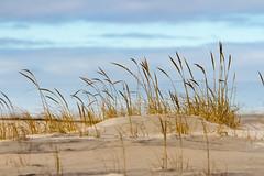 Jersey Shore, Island Beach State Park (JMFusco) Tags: newjersey newjerseyshore islandbeachstatepark nature