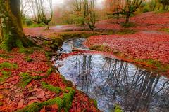 otzarreta  reflejos100 (juan luis olaeta) Tags: paisajes landscape agua urak reflejos bosque hayedo pagoa tree canoneos60d photoshop lihtroom