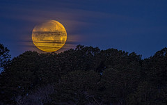 Super Blue Blood Moon Setting Over Great Marsh Wetlands (stevebfotos) Tags: bluemoon supermoon bloodmoon sky moon wetlands