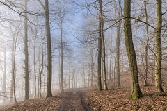 *Moselsteig - Winter* (Albert Wirtz @ Landscape and Nature Photography) Tags: moselsteig moselletrail mosel moseltal moselhöhenweg ürzig steillagen riesling forest wein weinbau fog mist nebbia nibble laniebla brume bruma brouillard natur nature natura landscape paesaggi paysages bernkastelwittlich landkreisbernkastelwittlich river stream buchenwald beechforest sonnig sunny foggy misty neblig dunstig waldweg forstweg unpavedroad moseleifel eifelmosel mosellevalley kulturlandschaft wood tree paph erden klettersteig erdenerklettersteig traumsteige nikon d810 deutschland germany rheinlandpfalz rhinelandpalatinate diamondclassphotographer albertwirtz