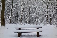 TheWood-11 (omarechal1) Tags: leaf explore artlegacy artistic expression white color colour photograph photos nature ice winter sonydscrx100 frozen wood france paris essonne verriereslebuisson perfect