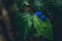 Jungle magic (julien.ginefri) Tags: argentina argentine america latinamerica southamerica iguazu iguaçu brasil brazil mariposa butterfly