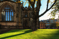 Tree outside of Manchester Cathedral in morning sun (Bart Ros) Tags: manchester cathedral tree grass church churches building sunny color colorful nature build old british uk unitedkingdom english england