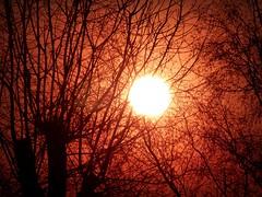 2018-02-22 sunset (9)f (april-mo) Tags: sunset coucherdesoleil nord france villerscampeau trees baretrees orange branches