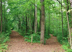Which trail to take? Hayes Arboretum, Richmond, IN (Visit Richmond Indiana) Tags: hiking trails indiana arboretum richmond outdoor recreation woods summer nature foliage peaceful