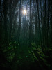 mysterious (De Lambo) Tags: landscape backlittrees enchanted forest green ireland shady trees