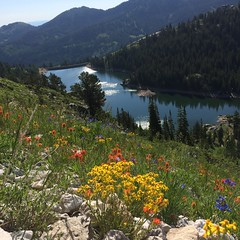 IMG_1050 (Market Source Real Estate) Tags: twinlakes hiking mountain flowers