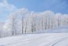 pure white resort (peaceful-jp-scenery (busy)) Tags: nekoma ski resort urabandai tohoku 猫魔スキー場 裏磐梯 東北 福島 日本 sony cybershot dscrx100m3 carlzeiss 2470mmf1828 20mp