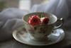 Rosebuds (Captured Heart) Tags: teacup roses stilllife rosebuds