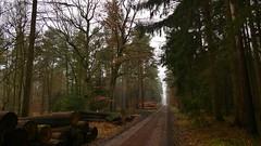 an einem trüben Januartag (marionkaminski) Tags: deutschland germany alemagne alemana niedersachsen lowersaxony regionhannover forest bois forêt bosque tree arbre arbol weg way