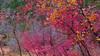 Fall colors in December (langkawi) Tags: zionnationalpark utah usa hiking landscape america scenic nature natur landschaft roadtrip