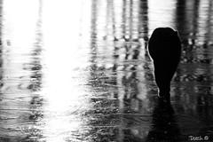 Cat on frozen lake. (Dutch in Denmark) Tags: cat pet frozen lake freezing frost blackandwhite black white denmark scandinavia dutch