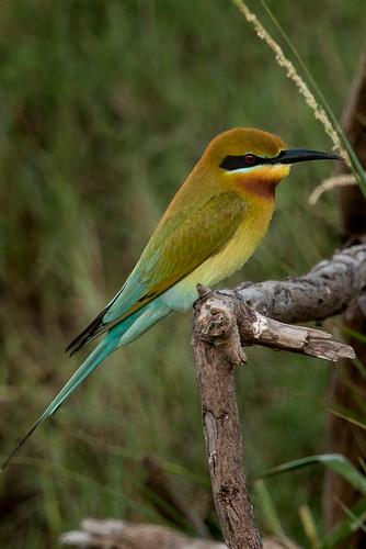 Bundala National Park, Sri Lanka