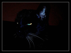 Nachtportrait (karin_b1966) Tags: katze cat tier animal haustier domesticanimal stubentiger roomtiger tyson yourbestoftoday