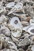 Gulf Shores Oysters (johnmcgrawphotography) Tags: alabama boat boatyard canon canon5dsr fishingship gulfshores gulfshoresalabama johnmcgraw johnmcgrawphotography landscape landscapephotography oystershells oysters photography ship travel travelphotography