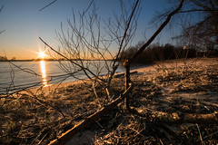 sunset beach (bjdewagenaar) Tags: photography photograph photographer sony sonyalpha sonyphotographer sonyimages sonya77ii landscape landscapephotography water waterscape river beach sigma wideangle ultrawideangle nature waal dutch holland trees raw lightroom