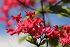 The red beauty... (irio.jyske) Tags: naturepictures naturephoto naturephotograph nature naturepic naturescape flower leaves colors ed blue green sky beauty apartment sun shining canonlens canoncamera canonpic canonphotograph canonpictures canonphoto canon