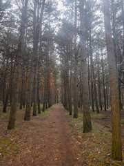 pinar de Fuentes Blancas (lgonzaloro) Tags: nature forest pine tree beautiful green landscape sea background nobody sun beauty sky white travel trees outdoors vacation europe sunlight mountain panorama space winter text