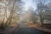 Misty Lane (aveyardphotography) Tags: mist misty lane country hovingham fog foggy morning sun sunny landscape nature light daylight trees early