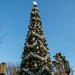 Buena Vista Street Christmas Tree